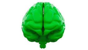 Green Human brain on white background. Anatomical Model, 3d illustration. Orange Human brain on white background. Anatomical Model, 3d illustration stock photography