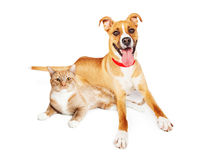 Orange hund och Cat Laying Together Arkivfoton