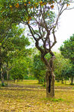 Orange ihåligt träd Royaltyfri Bild