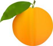 Orange. Illustration Of Orange Fruit with a leaf Stock Photos