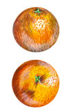 Orange fruit pencil llustration royalty free illustration