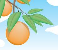 Orange im Baum mit Blättern Lizenzfreie Stockfotografie