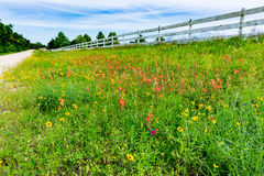 Orange Indian Paintbrush and Other Wildflowers in a Texas Field Royalty Free Stock Photography