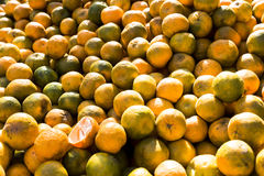 Orange indienne en été Photos stock