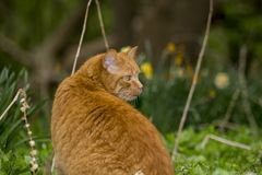 Orange Ingwer farbige Katze, die in der Natur sitzt lizenzfreie stockfotos