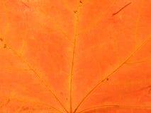 Orange Intensität Stockfoto
