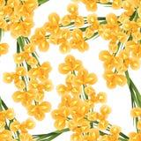 Orange Iris Flower on White Background. Vector Illustration.  vector illustration