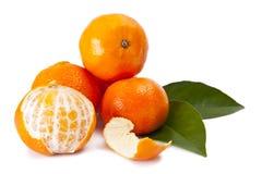 Orange isolated. On white background Stock Photography