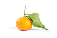 Orange isolated Royalty Free Stock Image