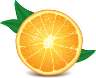 Orange isolated on white photo-realistic. Vector illustration royalty free illustration