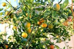 Orange Jahreszeitnähern Stockfotos