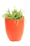 Orange Jardiniere Stock Photo