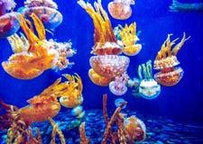 Orange jellyfish Stock Photography