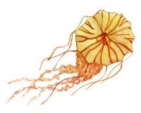 Orange jellyfish hand drawn watercolor clip art