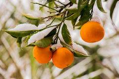 Winter orange joy. Royalty Free Stock Photos