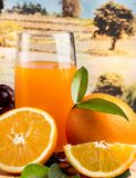 Orange Juice Fresh Indicates Citrus Fruit und Getränke stockfotografie