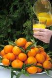 Orange juice and fresh oranges. Orange plantation in Spain - Orange juice and fresh oranges stock photo