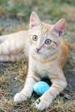 Orange Kätzchen lizenzfreies stockbild