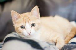 Orange Kätzchen, das Kamera betrachtet stockbilder