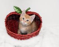 Orange Kätzchen der getigerten Katze innerhalb des Apfelkorbes Stockfotos