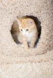 Orange Kätzchen im Katzebaum lizenzfreie stockbilder