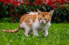 Orange Kätzchenkatze, die im Gras in einem Park sitzt stockfoto
