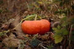 Orange Kürbis Lizenzfreies Stockbild