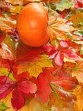 Orange Kürbis auf Blättern Stockfotografie