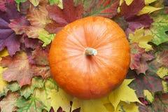Orange Kürbis auf dem Herbstlaub Stockfoto
