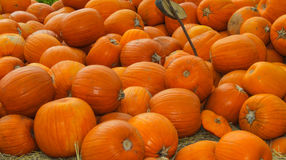 Orange Kürbis auf Stroh Lizenzfreie Stockfotos
