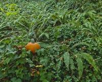 Orange Kürbis, der im Wald auf einem Stumpf mit den Farnen und Efeu umgeben ihn sitzt stockbild