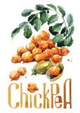 Orange Kürbis Handzeichnungsaquarell auf weißem Hintergrund mit Titel lizenzfreie abbildung