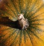 Orange Kürbis-Stiel stockfoto