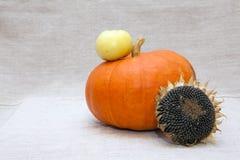 Orange Kürbis, sunflower's Kopf und weißer Apfel Lizenzfreie Stockfotografie