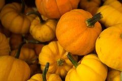Orange Kürbis-Zusammenstellung Lizenzfreie Stockfotografie