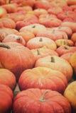 Orange Kürbise für Halloween oder Danksagung, Kürbis Hintergrund Stockbilder