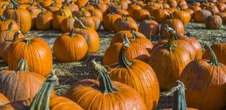 Orange Kürbise Landwirtmarkt am im Freien lizenzfreie stockfotografie
