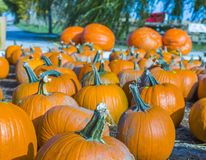 Orange Kürbise Landwirtmarkt am im Freien stockfotografie