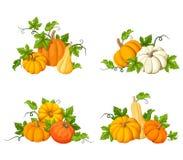 Orange Kürbise Photorealistic Ausschnittskizze Stockbilder