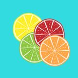 Orange, Kalk, Limon, Grenadinen-Vektor Lizenzfreie Stockbilder