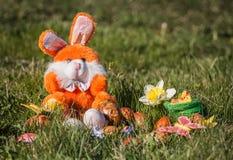 orange kanin Royaltyfria Foton
