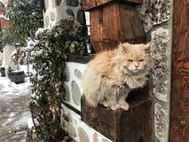 Orange katt Arkivbild