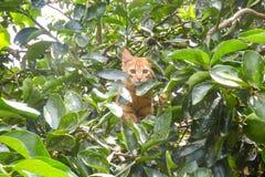 Orange katt bland sidorna av ett träd Arkivbilder