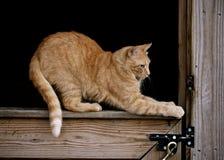 Orange katt i ladugård Arkivbild