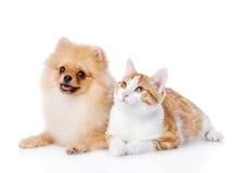 Orange katt- och spitzhund tillsammans härligt se utomhus upp kvinnabarn Isolerat på vit Arkivfoto