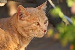 Orange katt som är lycklig i naturen arkivbilder