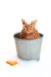 Orange katt som får ett bad i en galvaniserad hink Royaltyfria Bilder