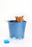 Orange katt som får ett bad i en hink Royaltyfri Foto