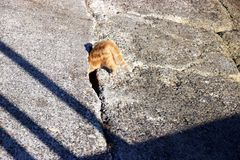 Orange katt som petar huvudet in i hålet i konkret ramp Royaltyfri Foto