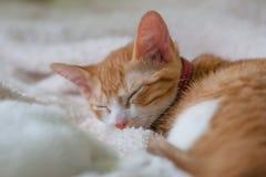 Orange katt som sover på en fluffig säng Royaltyfri Fotografi